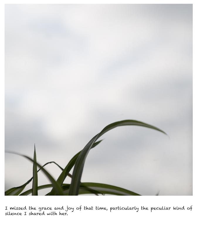 http://www.songkun.net/files/gimgs/7_20110201-leafs.jpg